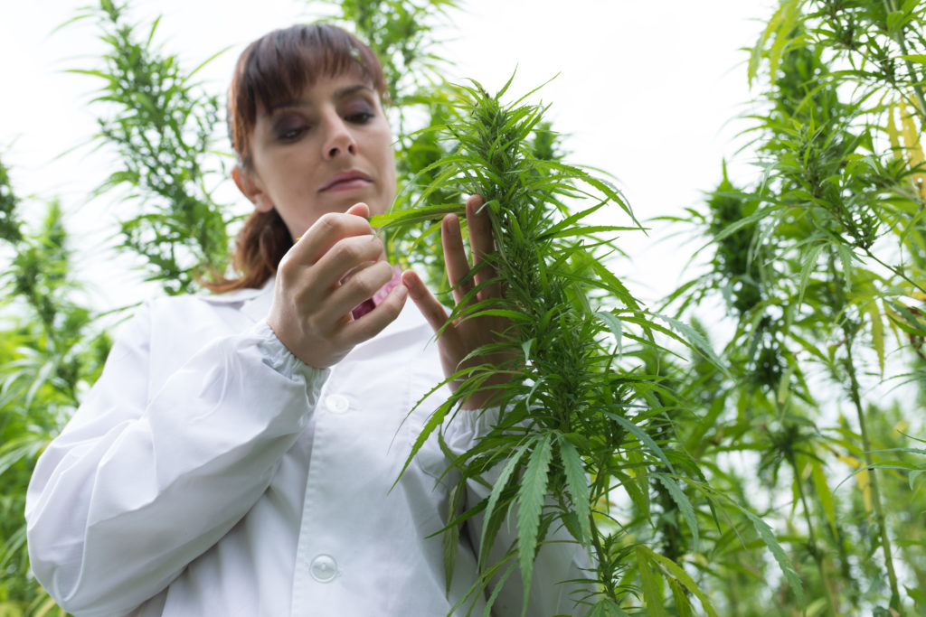 """""""Cannabis is a natural resource, owned by everyone, everyone should reap the benefit, Socially, Economically, Environmentally, and Medically."""" Dr Carol Coombes OBE, UK"""